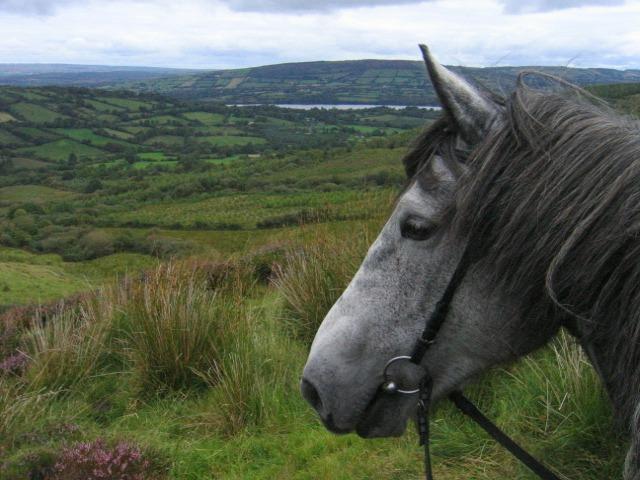 Irland-256mb-052